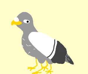 four legged bird