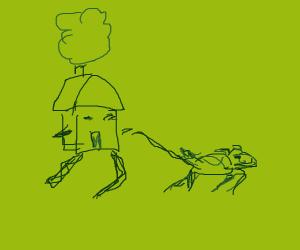 tiny house walking a dog