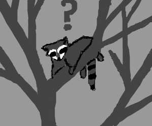 confused raccoon