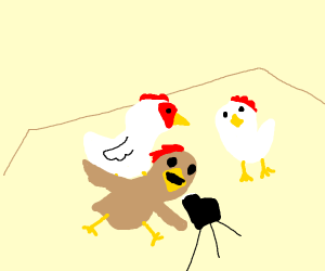 3 chicken in front of the camera