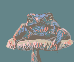 A toad on a toadstool