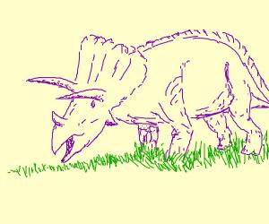 purple triceratops