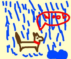 dog in the rain
