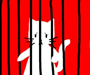 cat is sad in prison