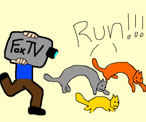 cats running from news reporter