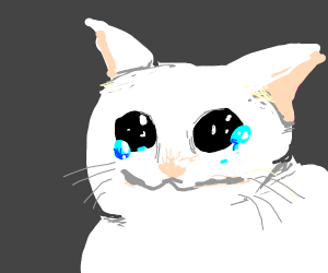 if cats could cry
