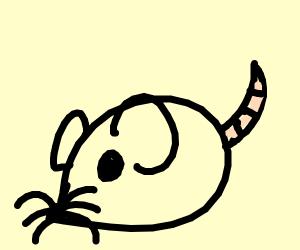 Cute lil rat