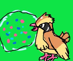Pidgey glares at berry bush