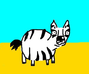A fat zebra