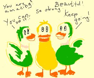 motivational ducks