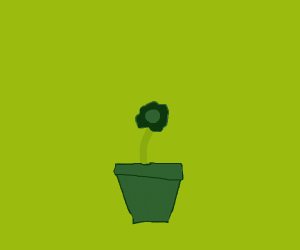 small dying flower in pot