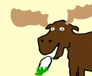 Moose eating white eggplant