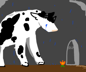 cow dad mourning over grave