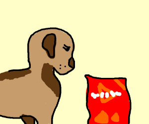 Dog is guilty of eating doritos