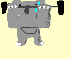 Koala Weightlifting