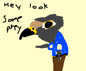 Falcon spots his next prey