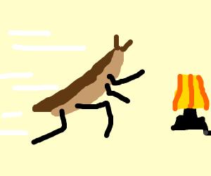 Moth Jogging