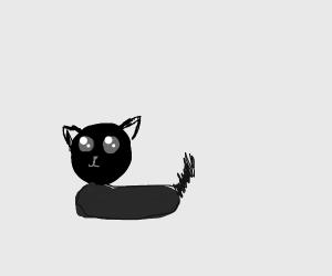 a very provocative black cat