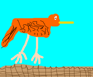orange birdie