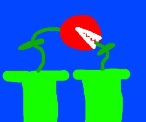 pirana plants kissing