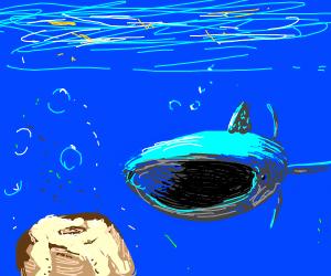 Fish swimming to a cinnamon roll