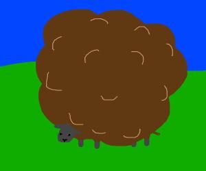 super wooly brown sheep