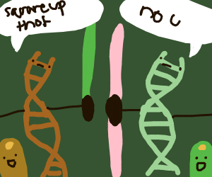 bean gene dominance