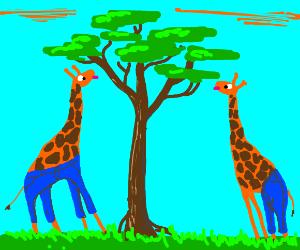 If a giraffe wore jeans