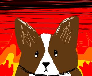 Corgi is in hell :(