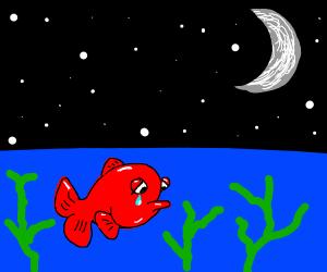 sad fish at night