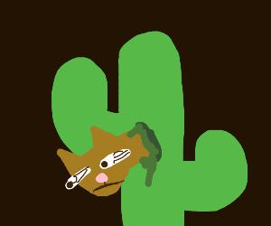 cat in a cactus at night