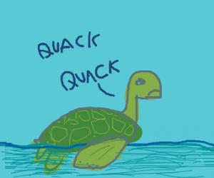 Turtle swims like a duck