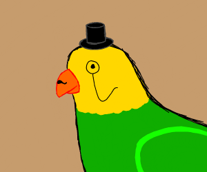 gentleman parakeet