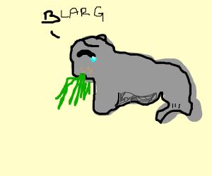 Puking walrus