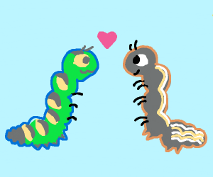 Two caterpillars in love