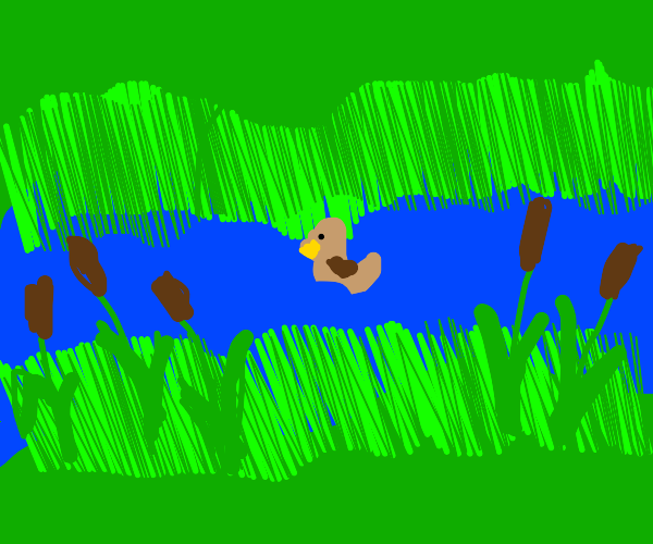 Duck floating on river