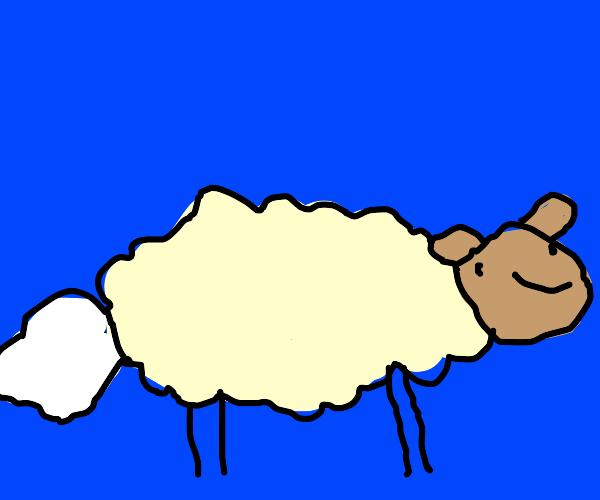 Plain Sheep