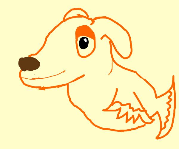 half goldfish half dog