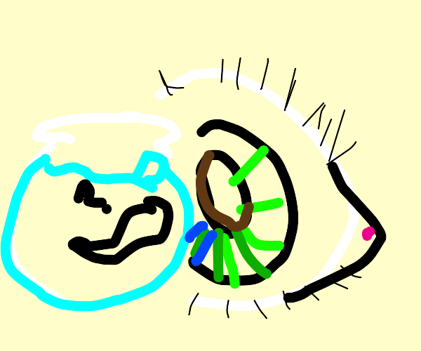 a tadpole in a bowl is confused at an eyeball