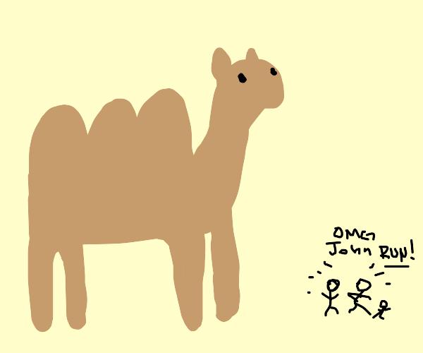 World's biggest 3-humped camel