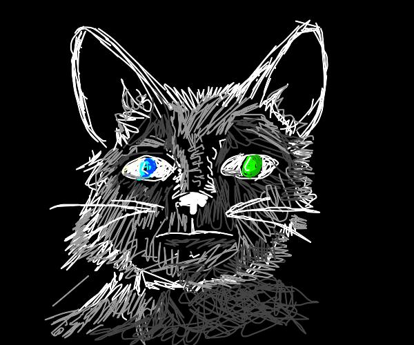 Cat person with heterochromia