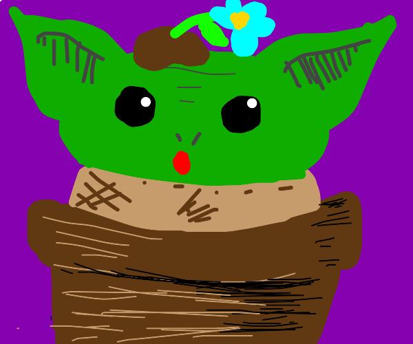 Baby yoda with pot