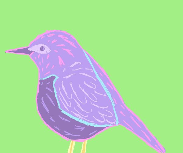 very nice bird :)