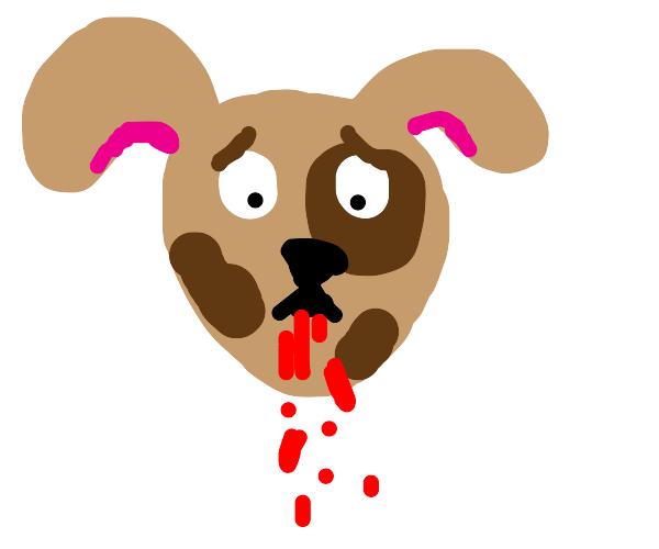 puppy spits blood.
