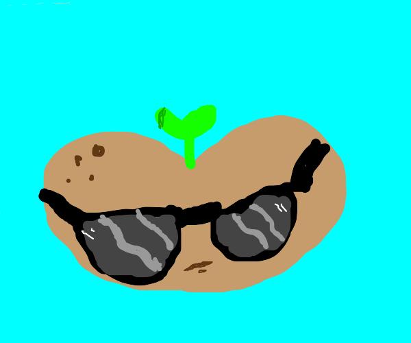Chill bean