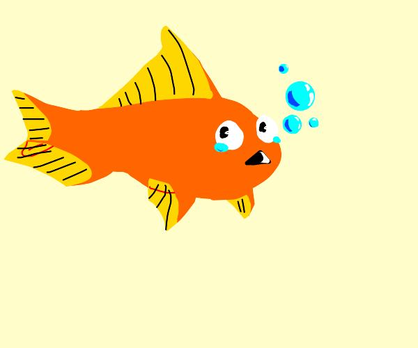 Sad goldfish