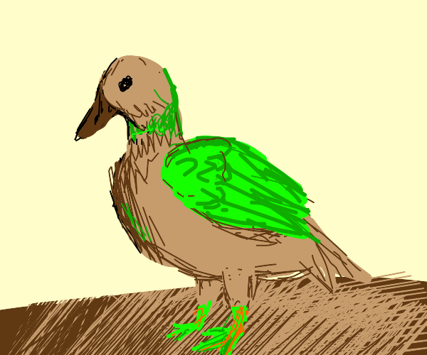 Duck with green wing