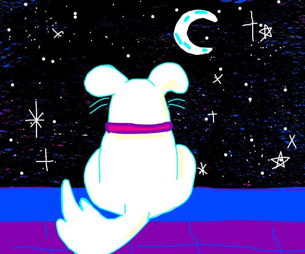 Cute doggo at night