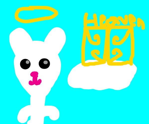 Bunny goes to heaven