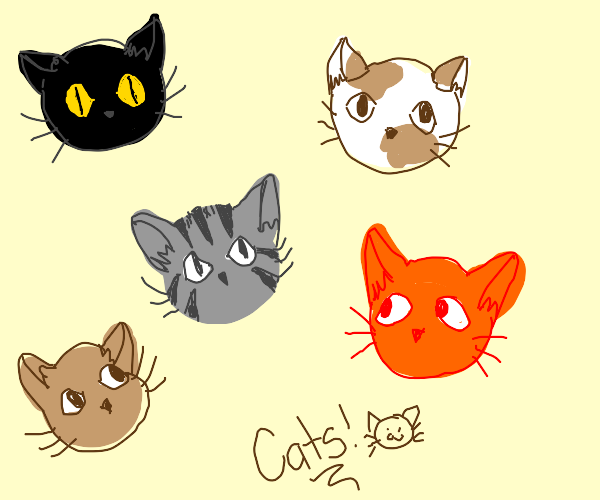 only draws cats